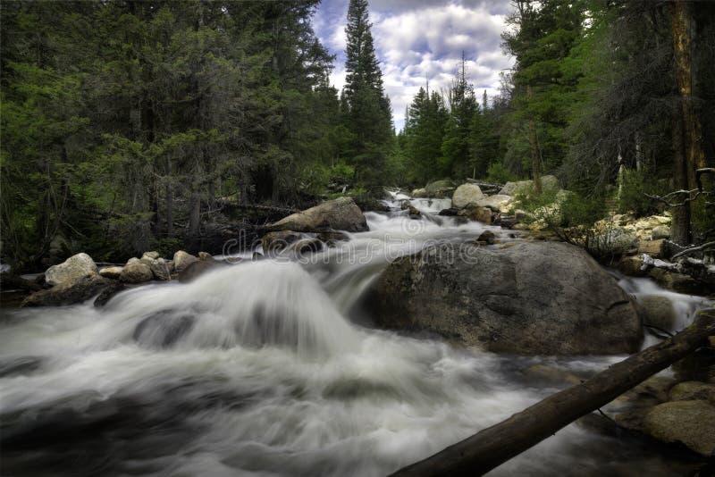 Спеша поток горы Колорадо стоковые фотографии rf