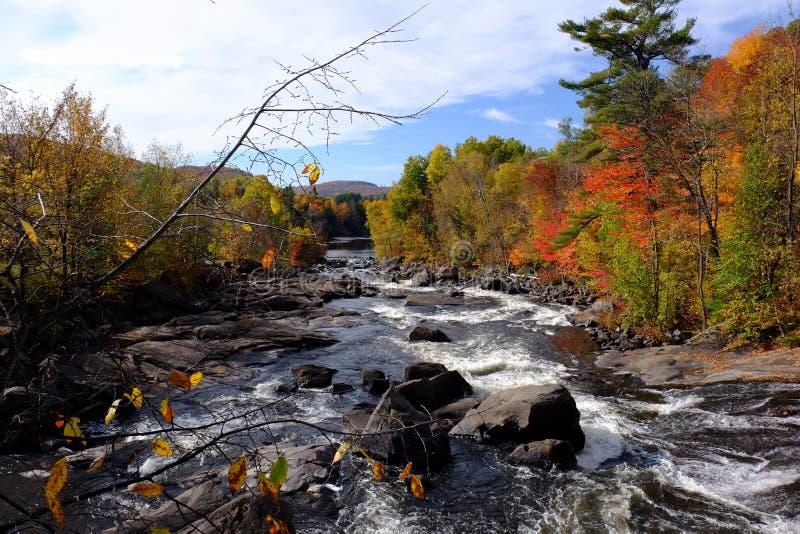 Спеша река через лес осени стоковые фотографии rf