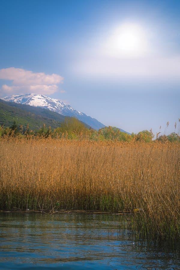 Спешка на озере Ohrid стоковое изображение