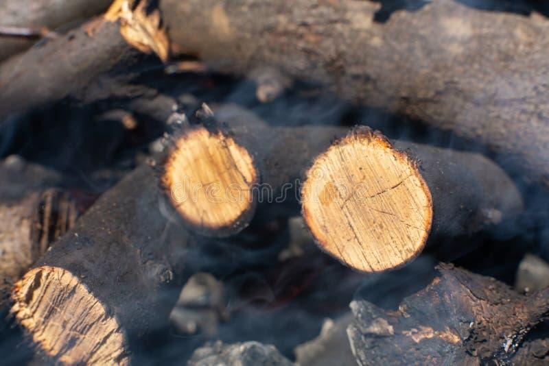 Спиленные ветви дерева для разжигать огонь стоковые изображения