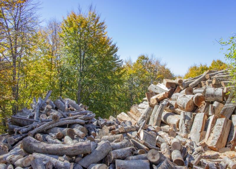 Спиленные стволы дерева различных размеров кладя в кучу против bac стоковые фото