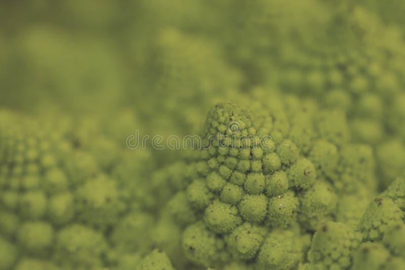 Спирали цветной капусты романск логарифмические закрывают вверх стоковое изображение