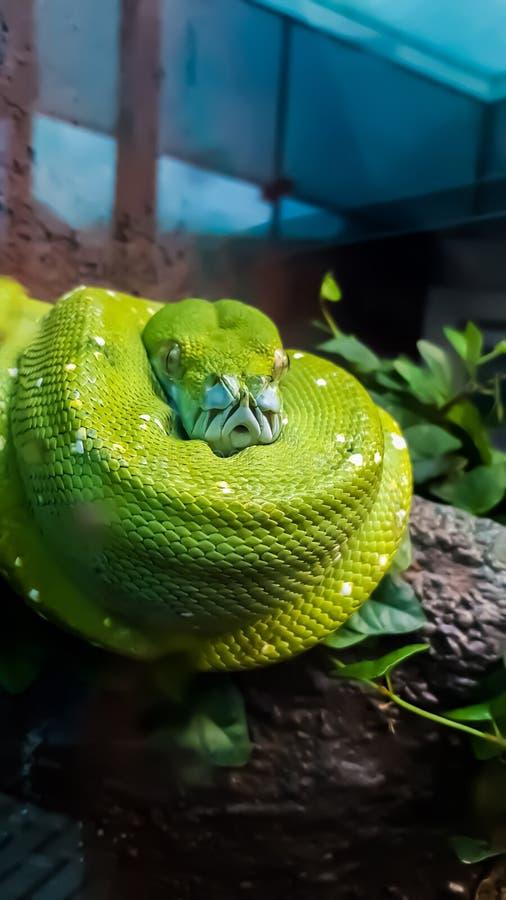 Спиральная зеленая змейка стоковое изображение rf