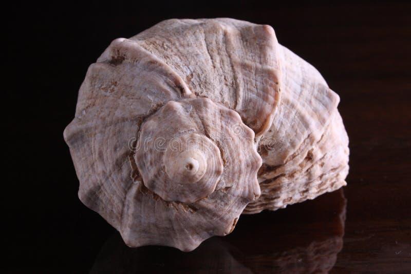 Спиральная раковина от морского дн дна стоковое изображение rf