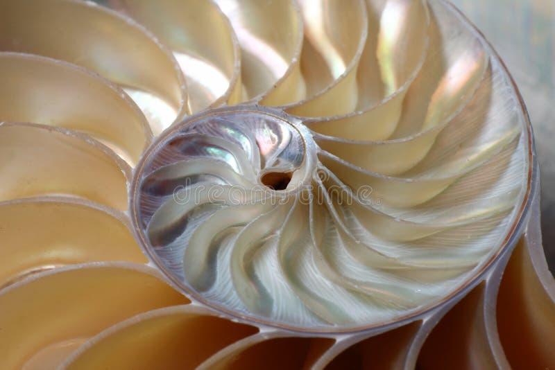 спираль nautilus стоковая фотография rf