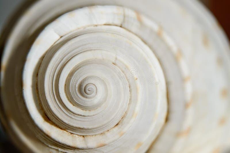 Спираль раковины моря стоковая фотография