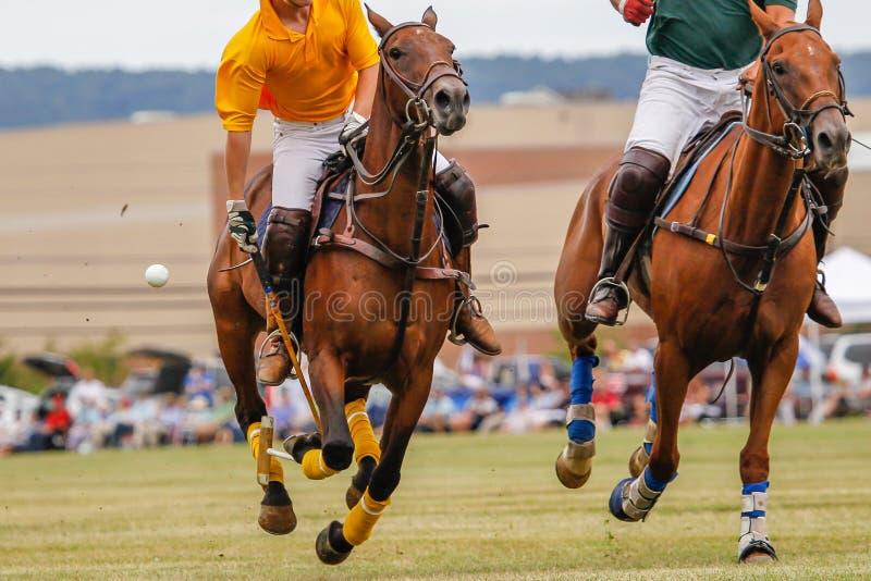 Спичка поло с скакать лошадей стоковое фото rf