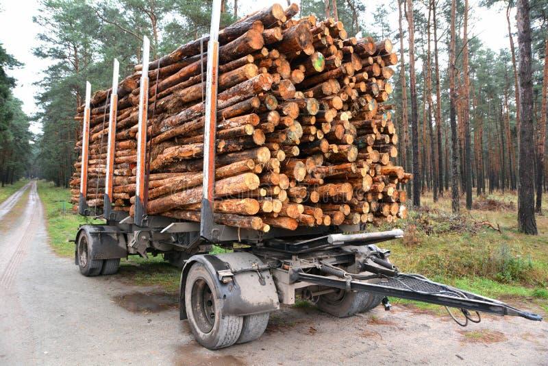 Спиленные- стволы дерева в лесе стоковая фотография