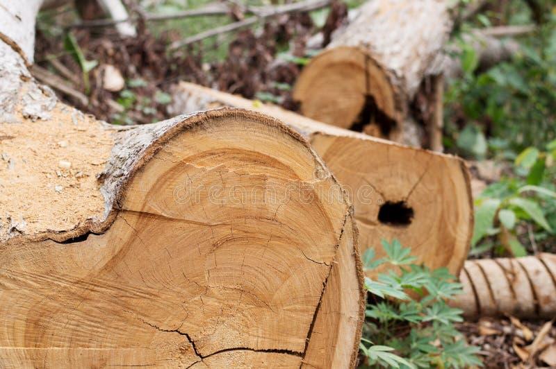 Спиленный ствол дерева стоковое фото rf