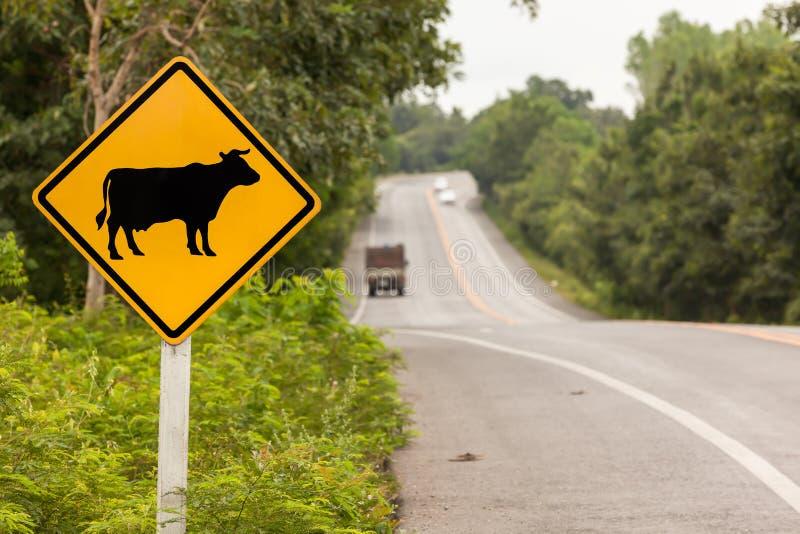 Спойте корове whit стоковые фото