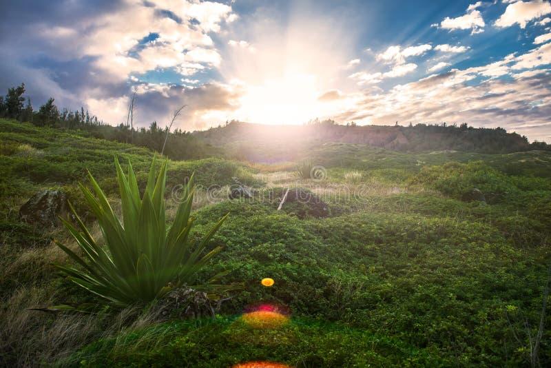 Спокойная и мирная зеленая тропическая лужайка с высокими холмами травы на времени захода солнца стоковое изображение