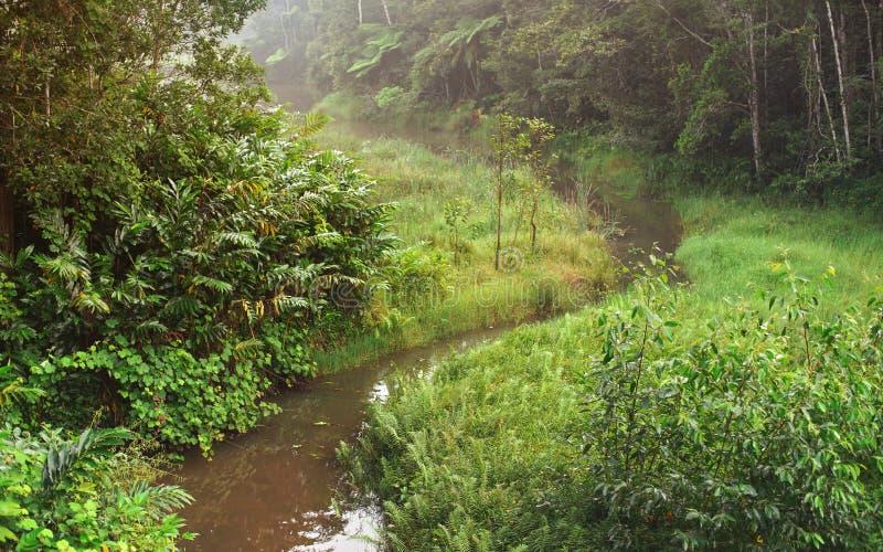Спокойное утро в африканских джунглях, тропический лес с небольшим рекой Живая зеленая листва - наибольшее из этого эндемичное к  стоковые фотографии rf