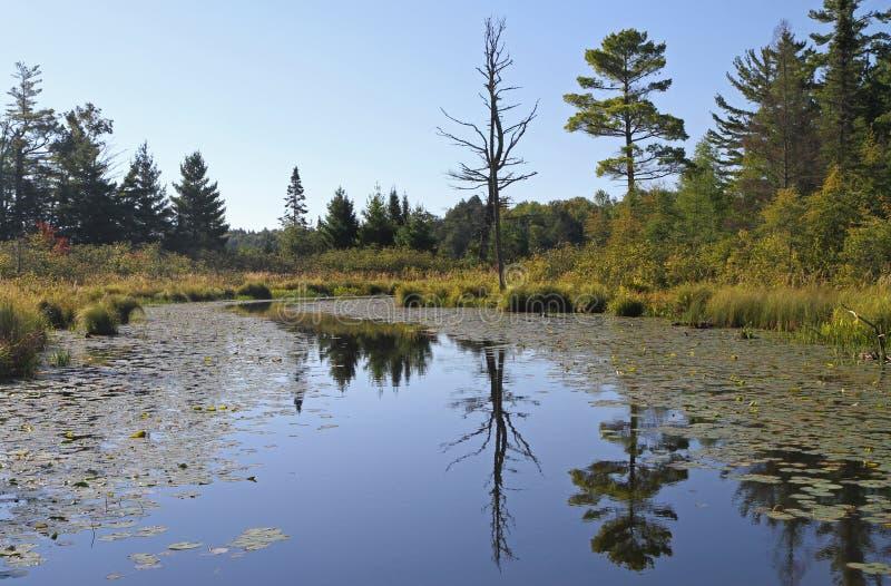 Download Спокойный водный путь глуши с отражениями Стоковое Изображение - изображение насчитывающей aquatics, река: 33733091