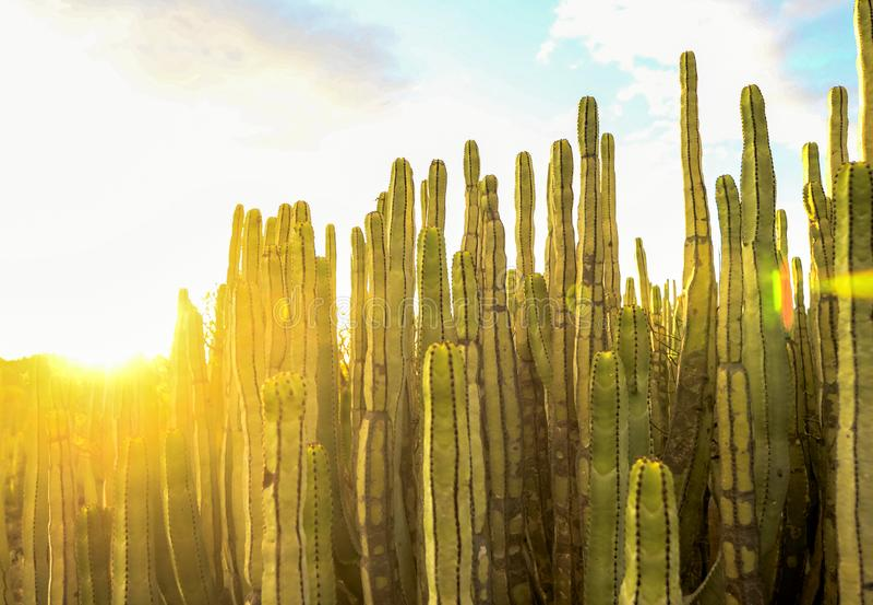 Спокойный заход солнца пустыни кактуса стоковое изображение
