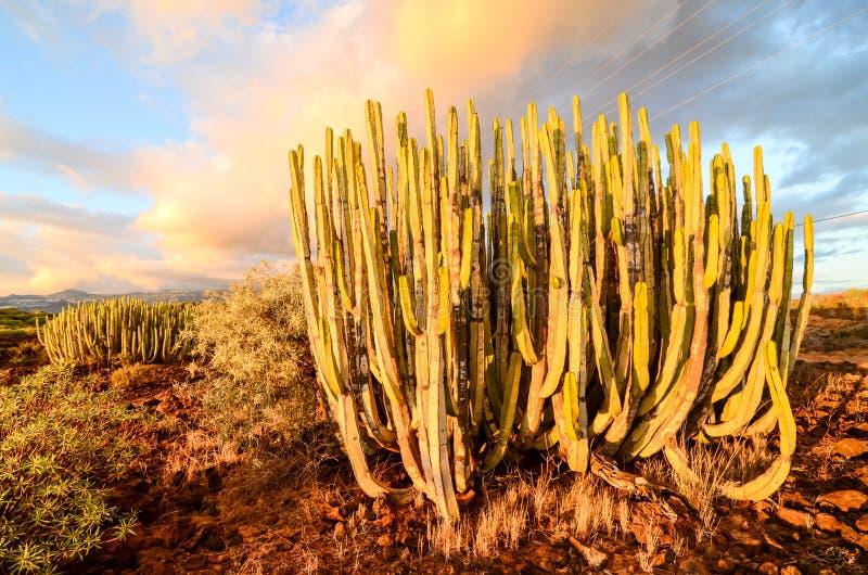 Спокойный заход солнца пустыни кактуса стоковые фотографии rf