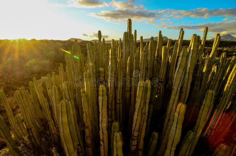 Спокойный заход солнца пустыни кактуса стоковая фотография