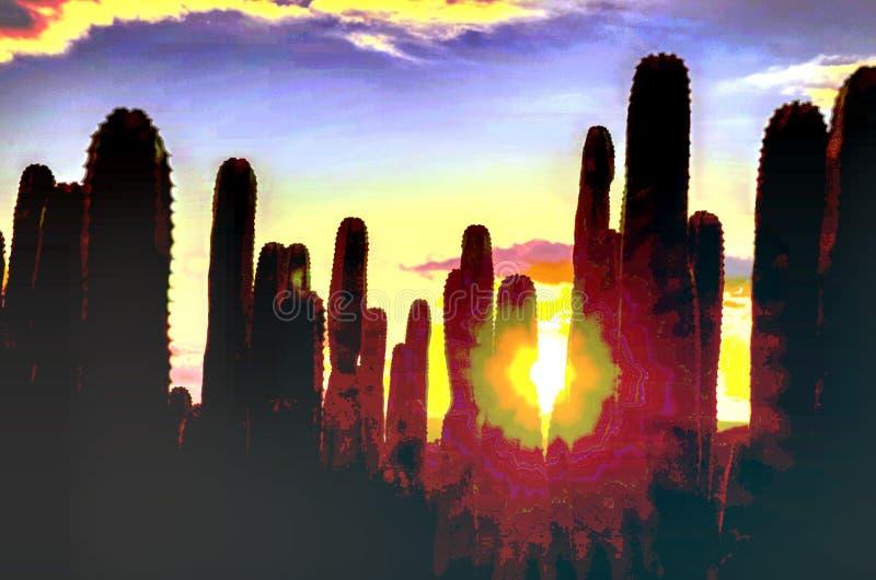 Спокойный заход солнца пустыни кактуса стоковая фотография rf