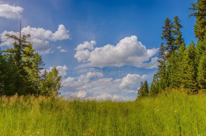 Спокойный зеленый луг стоковые фотографии rf