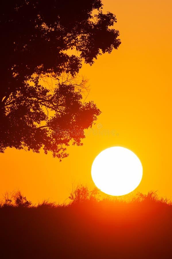 Спокойный ландшафт по солнцу, золотая установка солнца на злаковике и дикие деревья r стоковая фотография rf