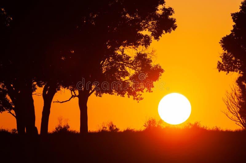 Спокойный ландшафт по солнцу, золотая установка солнца на злаковике и дикие деревья r стоковые изображения rf