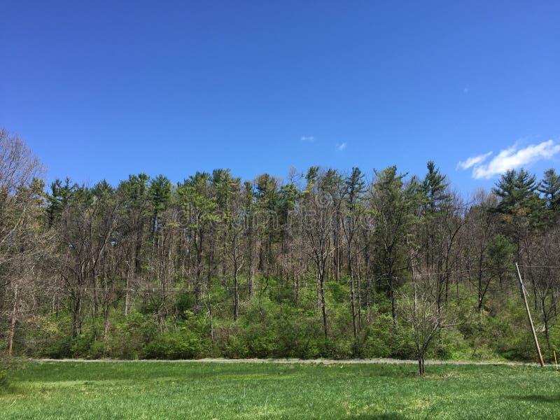 Спокойствие древесин и неба стоковые изображения
