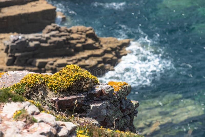 Спокойствие панцыря побережья и хорошая погода стоковое изображение