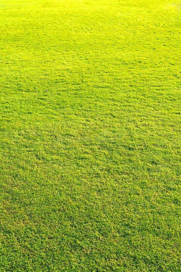 спортивная площадка, зеленая картина лужайки, предпосылка зеленой травы естественная стоковые изображения
