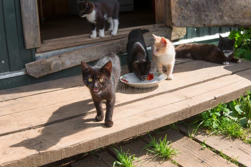 Спрашивают, что едят котята стоковые фотографии rf