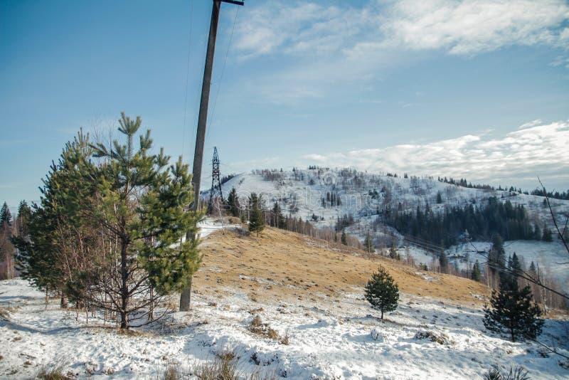 Спрус ели горы лесных деревьев стоковая фотография
