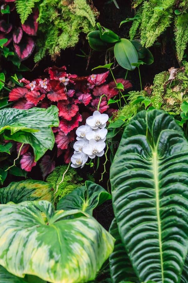 Спрятанная орхидея стоковое фото rf