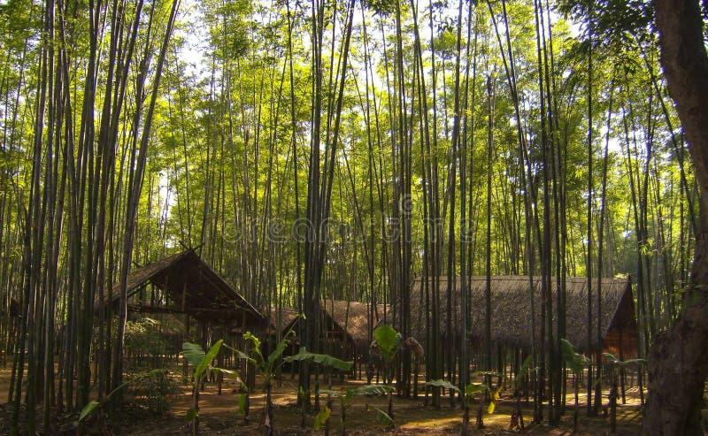 Спрятанное место в джунглях стоковые фото