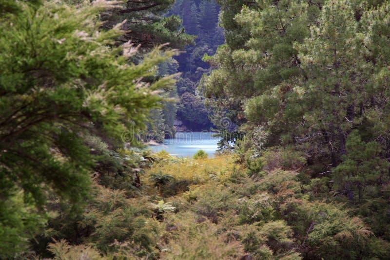 Спрятанное озеро стоковые фото