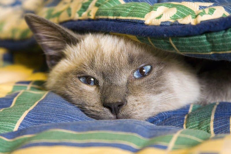 спрятанный кот стоковая фотография