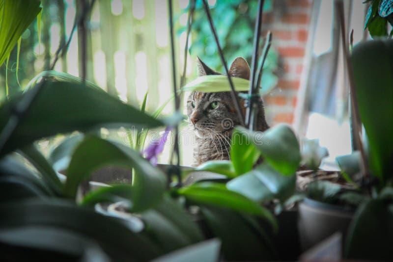 спрятанный кот стоковые изображения