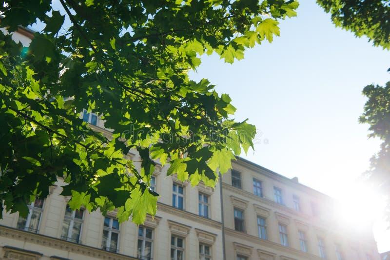 Спрячьте в тени под деревом Взгляд от тени на солнечном небе Солнце поднимая над зданием Городской и архитектура r стоковое изображение