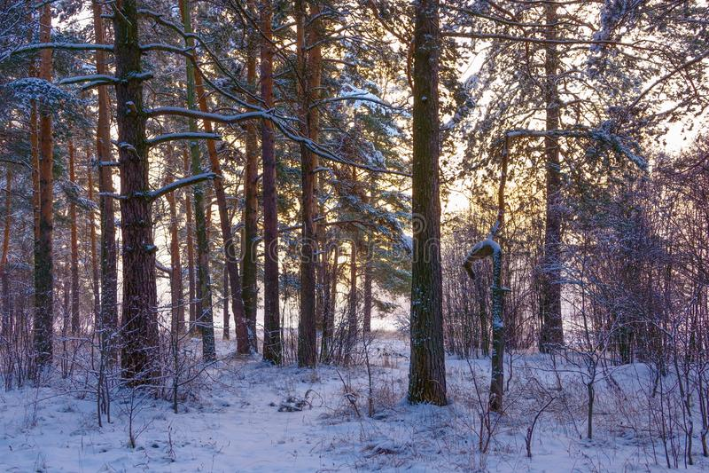 Спуск морозного холода туманный стоковая фотография