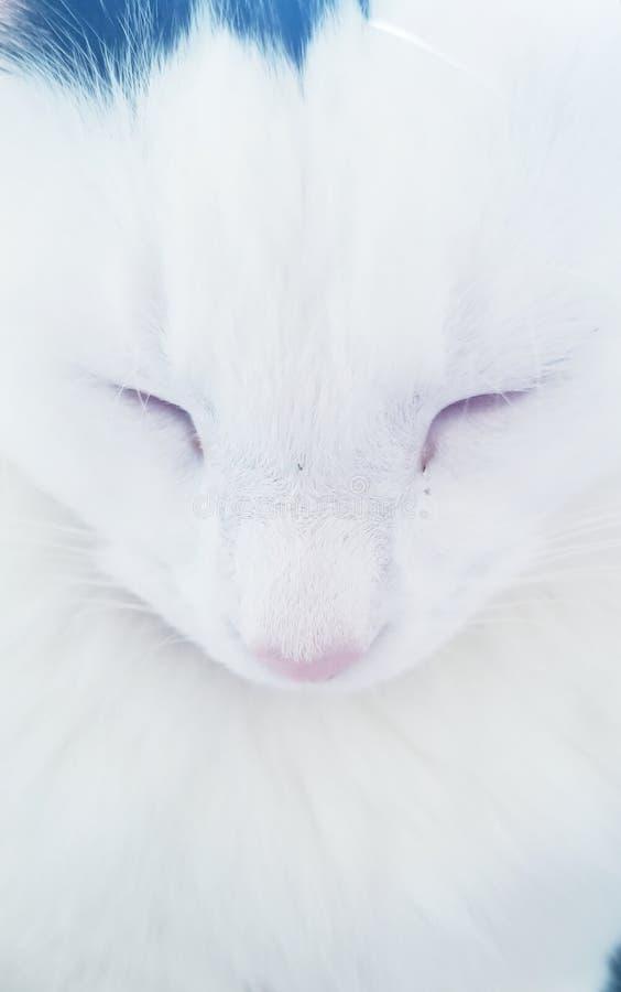 Спящий белый котенок с черным пятном стоковое изображение