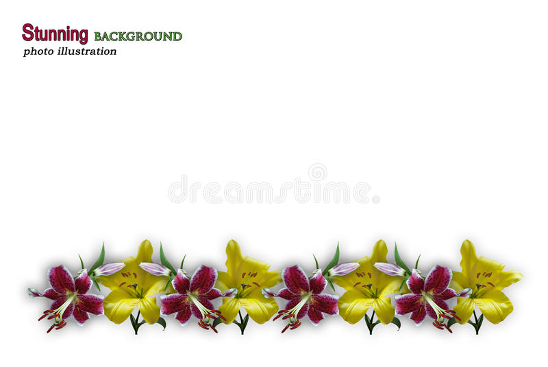 Сплавливание границы лилии бесплатная иллюстрация