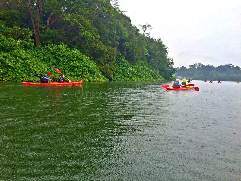 Сплавляться, озеро, лес стоковое изображение rf