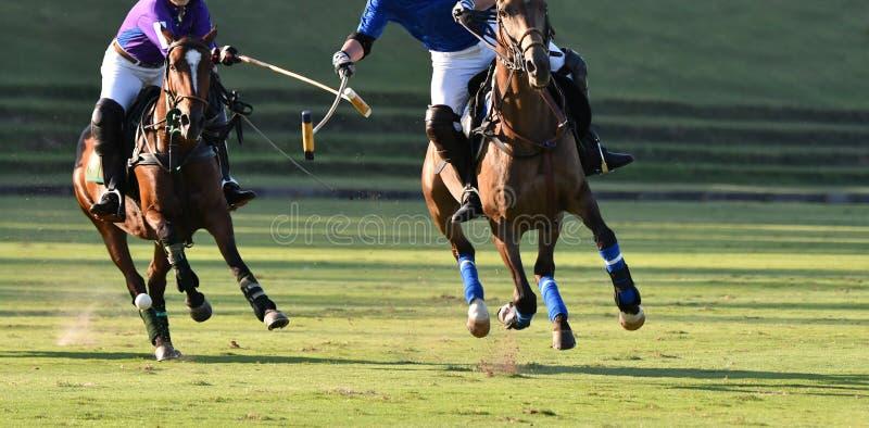 Сражение игрока поло лошади стоковые фотографии rf