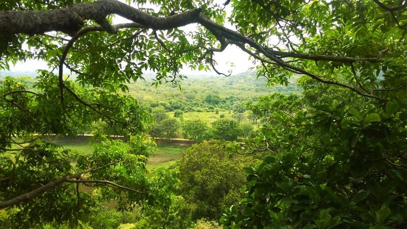 Среди взгляда деревьев стоковое изображение rf