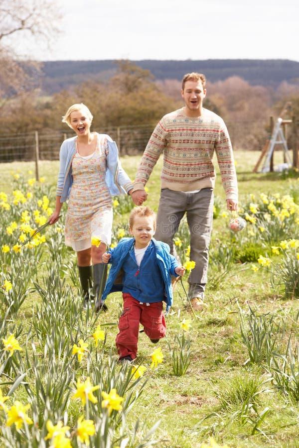 среди детенышей весны семьи daffodils гуляя стоковая фотография