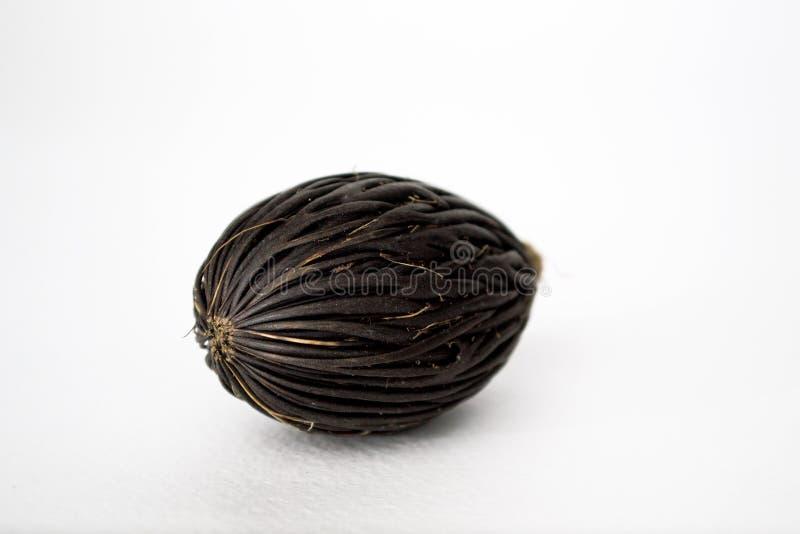 Среди этих экзотическое семя ладони лисохвоста Bifurcata Wodyetia Черное, изумляя семя на белой предпосылке стоковые фото