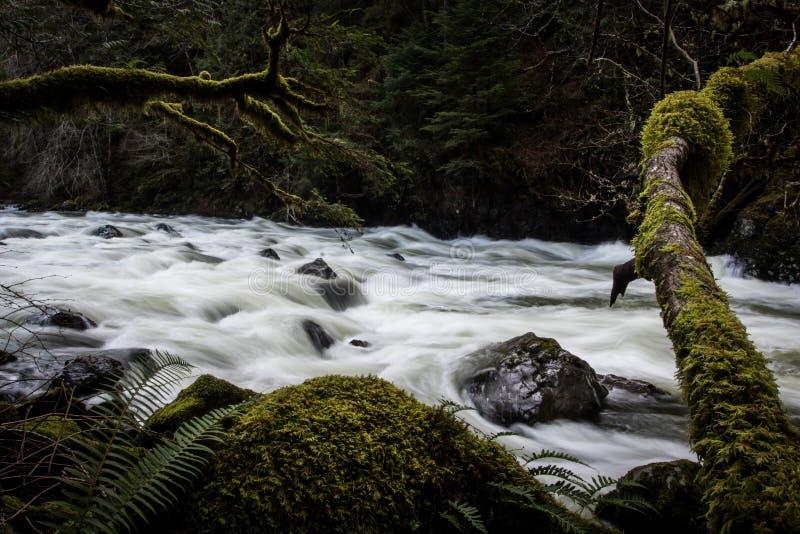 Среднее река вилки в северном загибе Вашингтоне стоковые фото
