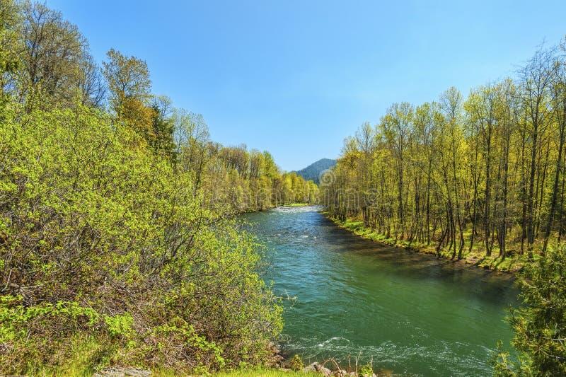 Средняя вилка реки Willamette стоковые фотографии rf
