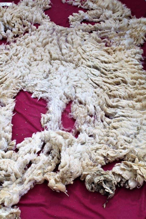 Срезанные шерсти стоковая фотография rf