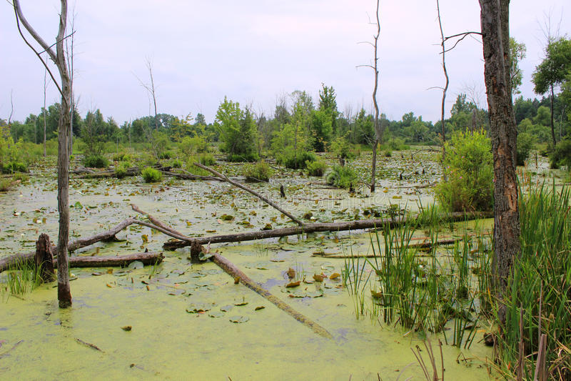 Среда обитания болота стоковые изображения rf