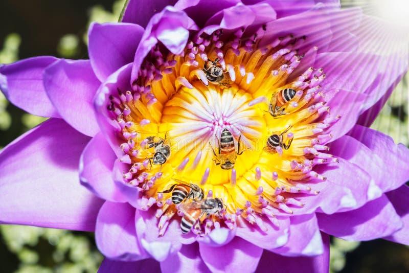 Среди пчел стоковые фотографии rf