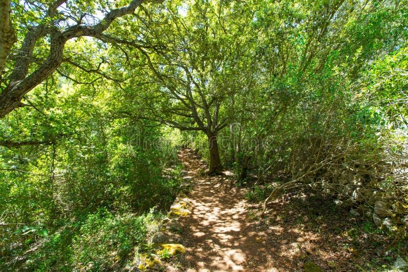 Среднеземноморской лес в Менорке с дубами стоковые фотографии rf