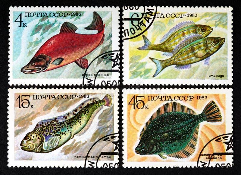 СССР - ОКОЛО 1983: серия штемпелей напечатанных в СССР, рыб выставок, ОКОЛО 1983 стоковые фотографии rf